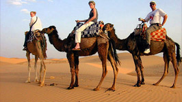 Camel Ride & Bedouin Tea in Sharm