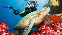 Diving Trip in Sharm El-Sheikh