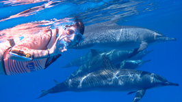 Snorkelling with Wild Dolphins in Hurghada
